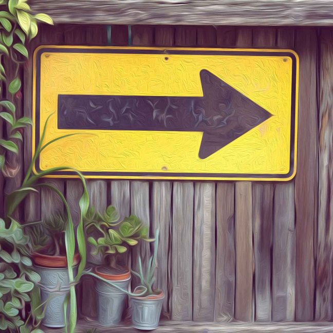 A yellow sign with a black arrow points to the right. It is hung on a wooden fence, with three plants of variable height in the forefront